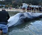Une baleine échoue sur la plage de Sidi Bou Saïd : Photos et vidéos