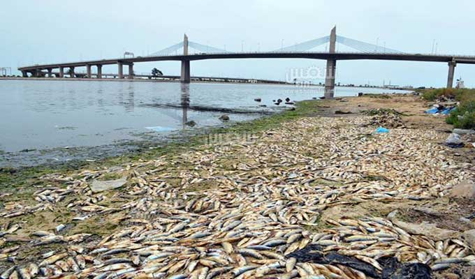 poissons-rejetés-radés