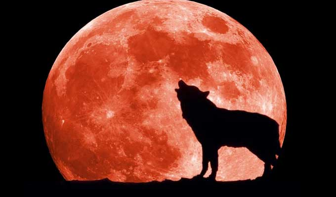 super-moon-wolf