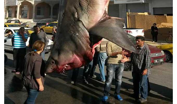 requin-sousse