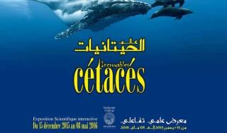 expo-cetaces-2015