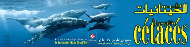 expo-cetaces--cite-des-sciences2015