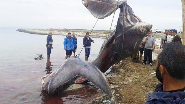 requin-djerba-ajim-2016-06
