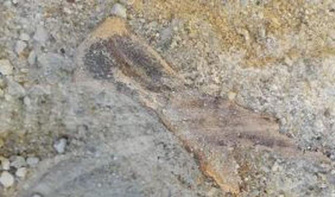 site-archeologique-nefta-tozeur