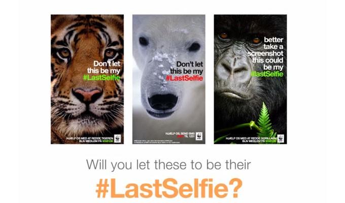 photos campagne wwf selfies des animaux en voie de. Black Bedroom Furniture Sets. Home Design Ideas