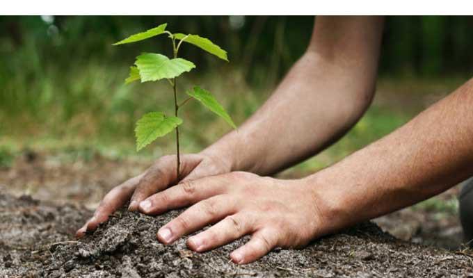 Tunisie f te de l 39 arbre une norme op ration de for De l arbre au meuble